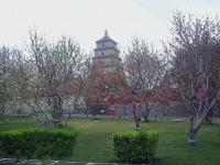 Big Goose Pagoda Attractive Scenery Xian