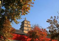 Big Goose Pagoda Beautiful Autumn Scenery Xian China