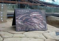 Elephant Tusks Remains from Feature No.1 at Jin Sha Site Museum