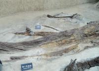 No. 11 Feature at Jin Sha Site Museum