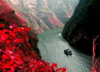 Lesser Three Gorges Read Leaves