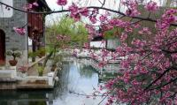 Ancient City of Lijiang Spring Scenery