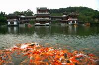 Qingxiu Mountain Beautiful Fishes in the Lake Nanning