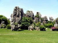 Stone Forest Charming Scenery Kunming