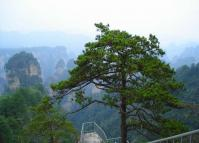 Yaozizhai Scenic Area at Zhangjiajie National Park