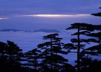 Yellow Mountain Pines and Sea of Clouds